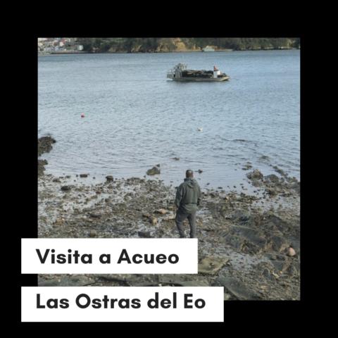 En Acueo, selección de ostras del Eo para KATA4